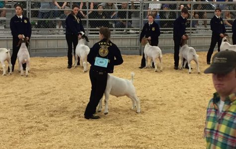 FFA Out to Market in District Show
