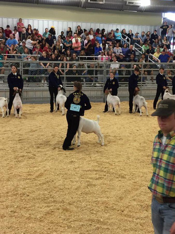 FFA Nicole for her 5th place Class 7 Market Goat and thank you to Flying M for purchasing her goat at the premium sale Feb 5